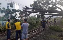 Cây đổ, đường sắt Bắc - Nam qua Biên Hoà tê liệt