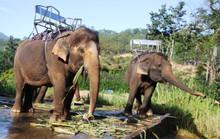Khu Du lịch thác Prenn Đà Lạt lại bị tố ngược đãi động vật