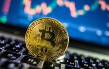 Bitcoin rơi xuống vực thẳm sau câu nói của ông Trump