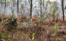 Huy động hơn 1.000 người tham gia dập lửa, cứu rừng thông đặc dụng ở TP Huế