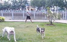 Run sợ với cảnh chó không rọ mõm tung tăng khắp chốn