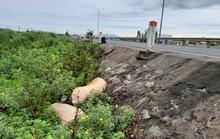 Quảng Nam: Xác heo dịch vứt ngay trên Quốc lộ 1