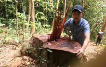 Bất ngờ với kết luận xử lý nhẹ tay của UBKT Tỉnh ủy Quảng Bình về 2 vụ phá rừng (!)