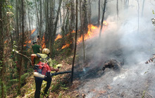 Hà Tĩnh lại xảy ra cháy rừng