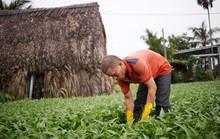 Đất nông nghiệp teo tóp dần