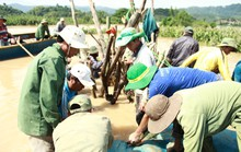 Hàng trăm người vật lộn cứu 1.000 ha lúa