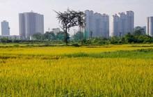 Ruộng trong thành phố