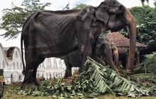 Hình ảnh voi trơ xương gây chấn động cộng đồng mạng