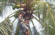 Xao xác dừa xanh Hàm Tiến