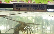 Nhà hàng ở Đà Nẵng lý giải hóa đơn bữa ăn hải sản 85 triệu đồng