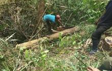 Chặt cây, xẻ gỗ và ngang nhiên qua trạm