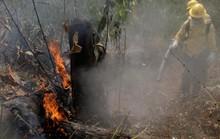 Brazil nói không với tiền viện trợ cứu rừng Amazon của G7
