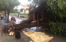 Ảnh hưởng bão số 4, Hà Nội mưa lớn làm đổ hàng loạt cây, 1 người chết
