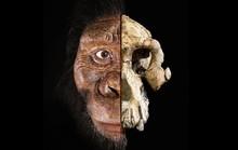 Phát hiện khuôn mặt mới của tổ tiên loài người 3,9 triệu tuổi