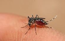 15 người tử vong do sốt xuất huyết
