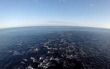 Đàn cá heo hơn 2.000 con khiến cả vùng biển dậy sóng