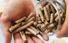 Việt Nam sẽ xuất khẩu lượng cực lớn viên nén gỗ sang Nhật Bản