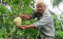 Lão nông với vườn mãng cầu dai cho trái khổng lồ