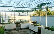 Chủ nhà mua 10 bồn tắm để trồng rau sân thượng