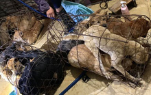 Triệu tập 30 nghi phạm trong đường dây trộm chó, tiêu thụ hơn 100 tấn