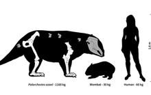 Lộ diện sinh vật lạ nặng 1 tấn, vuốt dao găm, mặt heo vòi