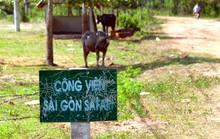Dự án Sài Gòn Safari: Phê bình nghiêm khắc lãnh đạo 2 sở và huyện Củ Chi