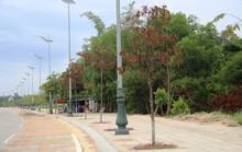 Hàng trăm cây xanh ở Quảng Ngãi chết khô bất thường