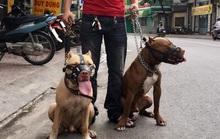 Nên cấm nuôi chó hung dữ