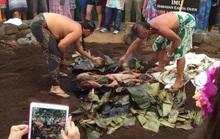 Người Hawaii đào hố làm lò nướng hơn 1.000 kg thịt heo