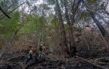 Bất ngờ với loài cây khủng long khiến Úc phải bung toàn lực bảo vệ