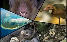 Những sinh vật tuyệt chủng bất ngờ sống dậy từ cõi chết