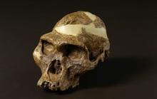 Bí ẩn loài người cổ mang hàm răng mãnh thú