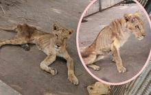 Những bộ xương di động trong vườn thú Sudan