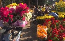 Chen nhau mua hoa giảm giá sáng 30 Tết, hàng chục gốc đào xứ Bắc bị bỏ lại ở chợ hoa