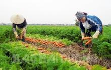 Mỗi năm chia nhau gần 6.000 tỉ đồng, làng tỉ phú hiếm có ở Việt Nam