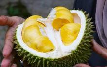 Tài xế có nồng độ cồn do ăn trái cây có bị phạt?