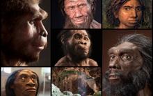 Chân dung 7 loài người khác từng sống song song với chúng ta