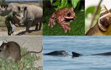 Những sinh vật cô đơn nhất trái đất và bi kịch không tránh khỏi