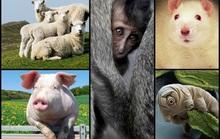 5 sinh vật đã và sẽ... lai với con người