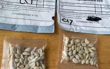 Chiêu trò đằng sau hạt giống bí ẩn gieo rắc hoang mang ở Mỹ