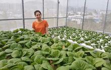 Gia đình trẻ biến sân thượng trống thành khu vườn trên mây