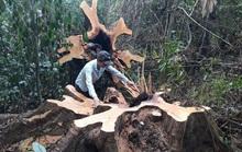 TÀN PHÁ THIÊN NHIÊN VÀ CÁI GIÁ PHẢI TRẢ: Mất rừng nguyên sinh, thiên tai khó lường
