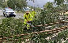 Bão số 9: Thừa Thiên - Huế có gió rất mạnh, cây đổ