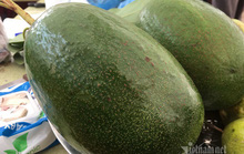 Quả bơ khổng lồ nặng 2 kg, hàng trên núi về gây sốt Hà thành