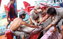 Siết chặt an toàn vệ sinh thực phẩm tàu cá