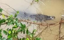 Hiểm họa cá sấu sổng chuồng