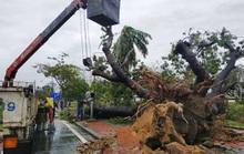 Bảo vệ cây xanh trước bão lũ