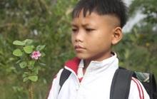 Thương cảnh học sinh vùng sạt lở núi hái hoa rừng để tặng giáo viên