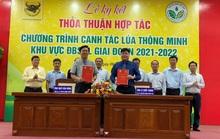 Bình Điền và Khuyến nông Quốc gia hợp tác canh tác lúa thông minh