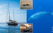 Phát hiện loài thủy quái chưa từng thấy trên thế giới, còn sống
